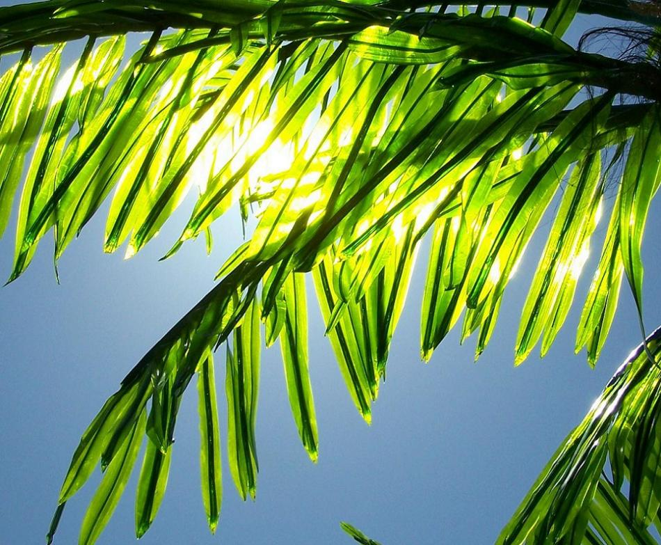 Jesus the triumphal entry jerusalem matthew 21 1 11 for Prayer palm plant